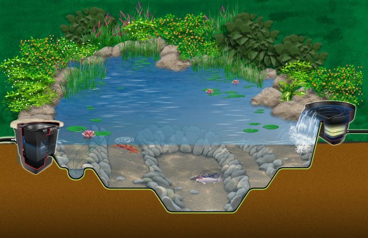 The ecosystem pond for Koi pool water gardens thornton